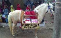 Indonésie: Luna, la petite jument sauvage devenue bibliothécaire-nomade pour enfants pauvres